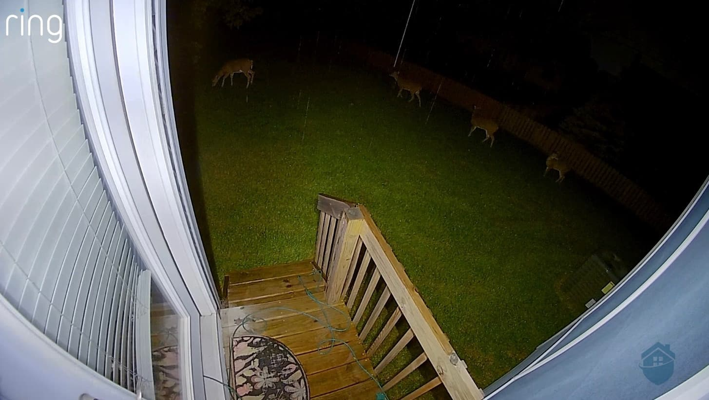 A family of deer travels across our property.