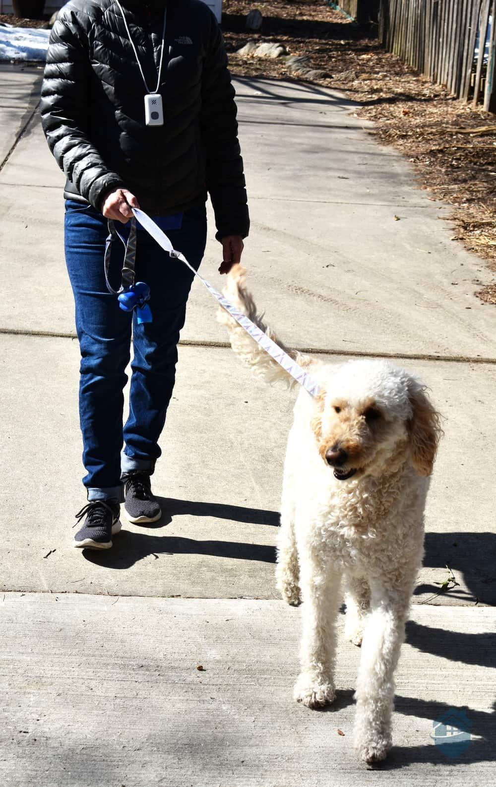 Wearing LifeStation while walking the dog